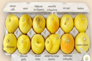 Αυτή η εικόνα με τα λεμόνια μπορεί να σώσει ζωές! Πώς συνδέεται με τον καρκίνο του μαστού;