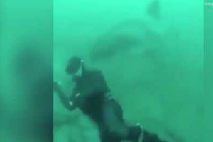 Καρχαρίας ορμάει να ξεσκίσει το κεφάλι δύτη με τη συνέχεια να σοκάρει...! (Video)