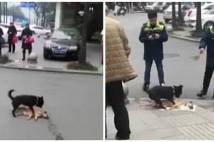 Ραγίζει καρδιές: Ένα κουτάβι προσπαθεί να ξυπνήσει τον νεκρό φίλο του - Η συνέχεια σοκάρει