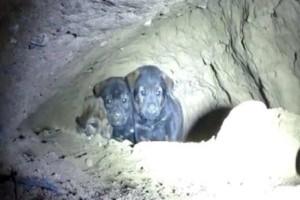 Προσπαθούσαν να σώσουν 8 εγκλωβισμένα κουταβάκια, αλλά μόλις κοίταξαν μέσα στην τρύπα έπαθαν σοκ