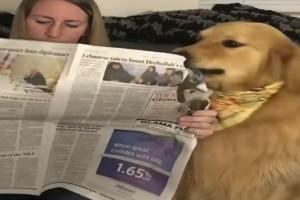 Σκύλος σκίζει την εφημερίδα που διαβάζει η ιδιοκτήτριά του με την συνέχεια να μην την περιμένετε! (Video)