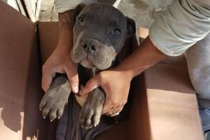 12χρονος άφησε τον σκύλο του σε καταφύγιο για να... Το σημείωμα στο κουτί που θα σας συγκλονίσει! (photo)