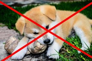 Προσοχή: Αυτά τα τρόφιμα είναι επικίνδυνα και τοξικά για τον σκύλο σας!