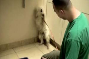 Πήγαιναν τον σκύλο για ευθανασία και το διαισθάνθηκε...Η αντίδραση του θα σας κάνει να δακρύσετε
