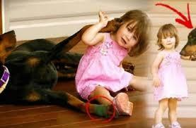 Σκύλος δάγκωσε το 17 μηνών κορίτσι. Μόλις κατάλαβε γιατί το είχε κάνει, πάγωσε!