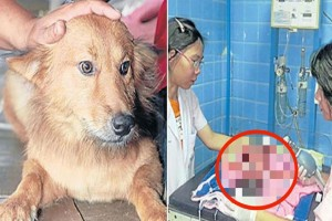 Σκύλος γύρισε σπίτι με μια σακούλα στο στόμα - Αυτό που είχε μέσα θα σας κόψει την ανάσα!