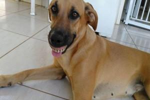 Νόμιζαν ότι ο σκύλος τους χαμογελάει αλλά όταν τον είδαν καλύτερα...Θα κλάψετε από τα γέλια!