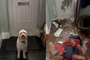 Άφησε τον σκύλο μόνο στο σπίτι για τρεις ώρες...Όταν γύρισε πίσω ήταν ήδη πολύ αργα!