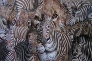 Μόνο το 5% των ανθρώπων βλέπει λιοντάρι και ζέβρες ταυτόχρονα - Το ζώο που είδατε πρώτο λέει τον χαρακτήρα σας