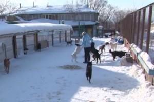 Κτηνωδία: Ζευγάρι υιοθέτησε σκύλο και στη συνέχεια τον σκότωσε, τον μαγείρεψε και τον έφαγε! (Video)