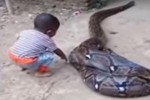 """Αδιανόητο: 5χρονος παίζει με ένα φίδι - Η αντίδραση των γονιών του θα σας κάνει να """"παγώσετε""""!"""