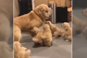 Αυτή η σκυλίτσα κάθεται μαζί με τα κουταβάκια της - Λίγα λεπτά αργότερα γίνεται το απίστευτο