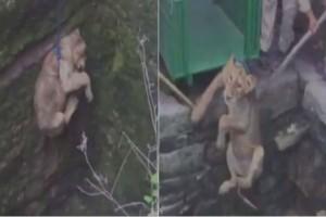 Ένας άντρας βρήκε ένα μικρό λιοντάρι παγιδευμένο μέσα σε ένα πηγάδι - Αυτό που ακολούθησε θα σας αφήσει με το στόμα ανοιχτό!