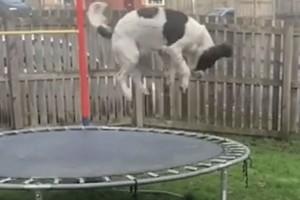 """Αυτός ο σκύλος έγινε ενός έτους και του έκαναν δώρο ένα τραμπολίνο - Μόλις δείτε την αντίδρασή του θα """"λιώσετε""""!"""