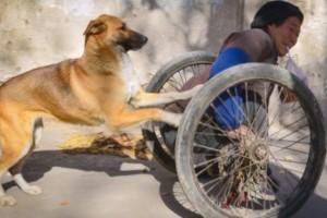Σκύλος σπρώχνει το παράλυτο αφεντικό του καθημερινά - Ο λόγος θα σας συγκινήσει