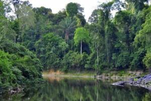 Πρωινός καφές στη… ζούγκλα: Το ανέκδοτο της ημέρας (08/04)