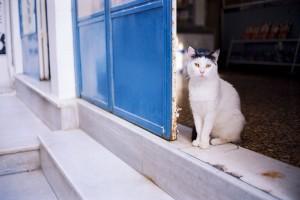 Αποκάλυψη σοκ για κορωνοϊό: Κολλάνε και οι γάτες