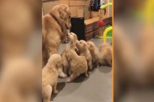 """Η πιο γλυκιά """"επίθεση"""": Αυτός ο σκύλος περικυκλώνεται από..."""