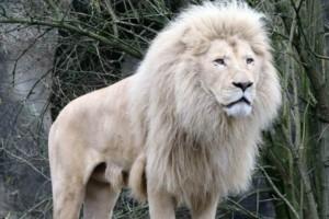 Κυνηγοί σκότωσαν ένα λιοντάρι - Αυτό που συνέβη μετά σοκάρει