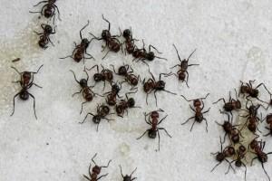 Δεν μπορούσε να ξεφορτωθεί τα μυρμήγκια από το σπίτι της και δείτε τι έκανε - Θα το λατρέψετε και εσείς!