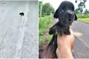 Όλοι αγνοούσαν αυτό το τυφλό και ταλαιπωρημένο σκυλάκι - Αυτό που ακολούθησε θα σας κάνει να δακρύσετε