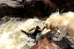 Αυτός ο σκύλος βλέπει το φίλο του να πνίγεται - Η αντίδραση του θα σας κάνει να δακρύσετε