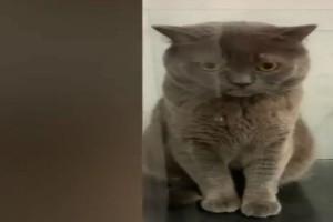 Ένα ζευγάρι έχασε τη γάτα του - Μόλις δείτε πού βρέθηκε θα μείνετε άφωνοι