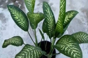 «Ο γιος μου πέθανε από αυτό το καταραμένο φυτό…»