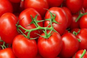 Κίνδυνος: Μην βάζετε τις ντομάτες στο ψυγείο σας γιατί...