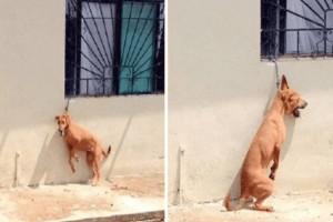 Τραγικό: Έδεσαν με κοντή αλυσίδα το σκύλο τους για να μην μπορεί να κάτσει! (photos)
