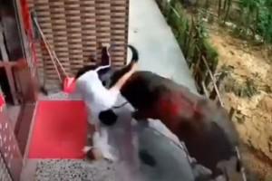 Βουβάλι επιτέθηκε σε μια μητέρα και το μωρό της - Σοκαριστικό βίντεο