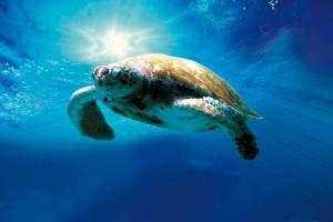 Η φωτογραφία της ημέρας: Παγκόσμια Ημέρα Χελώνας