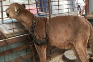 Ξεχασμένο λιοντάρι ζούσε 20 χρόνια σε ένα φορτηγό: Η συνέχεια θα σας κάνει να δακρύσετε