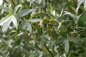 Αυτό είναι το φυτό - θαύμα που θεραπεύει την αρθρίτιδα