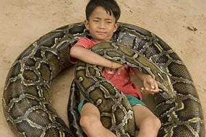 Γιγαντιαίος πύθωνας παίζει και κοιμάται αγκαλιά με ένα 7χρονο αγόρι!