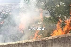 Φωτιά στη Λαμία - Δίπλα σε σπίτια οι φλόγες