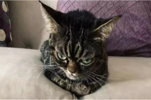 """Η γάτα αυτή έχει μόνιμα το ίδιο κατσουφιασμένο ύφος - Μόλις την δείτε θα """"κλάψετε"""""""
