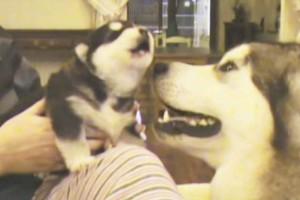 Κλάψαμε στα γέλια: Σκύλος προσπαθεί να γαβγίσει για πρώτη φορά - Το βίντεο έχει γίνει viral