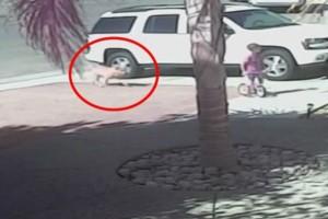 Σκύλος όρμηξε πάνω στο μικρό παιδί και άρχισε να το δαγκώνει - Δείτε όμως τι έγινε, όταν εμφανίστηκε η γάτα... (Video)