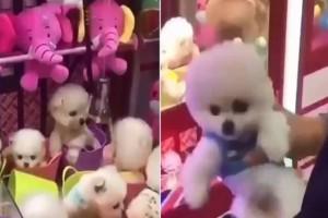 Τραγικό: Έβαλαν σκυλάκι μέσα σε παιχνίδι με την δαγκάνα (video)