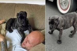 Όταν αγόρασε αυτό το σκυλάκι του είπαν ότι θα γίνει γίγαντας. Δεν περίμενε όμως τέτοια εξέλιξη