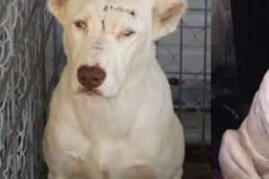 Κακοποιημένος σκύλος ξυπνά μια γυναίκα που τον έσωσε για να... - Αυτή η ιστορία ραγίζει καρδιές