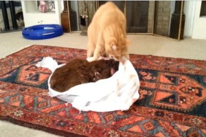 Ο φίλος της γάτας πέθανε από καρκίνο - Αυτό που του έκανε θα σας κάνει να δακρύσετε