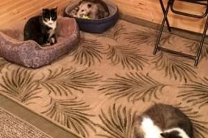 Γιαγιά νόμιζε ότι φροντίζει 3 γάτες μέχρι που ο εγγονός κατάλαβε το ολέθριο λάθος της...