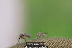 Κουνούπια: Πως να τα διώξετε χρησιμοποιώντας μόνο 3 συστατικά