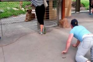 Αυτός ο άνδρας έπεσε κάτω για να ξεσηκώσει ένα λιοντάρι - Μόλις τον είδε...