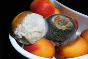 Το κόλπο για να μην μουχλιάζουν τα φρούτα στο ψυγείο - Δεν θα τα ξαναπετάξετε