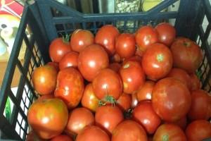 Ντομάτες - θάνατος: Σ' αυτό το σημείο του σπιτιού απαγορεύεται να τις βάζετε!