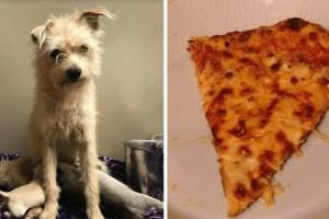"""""""Φτωχός"""" σκύλος κλέβει ένα κομμάτι πίτσας - Ο λόγος που το κάνει συγκλονίζει"""