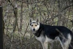 """Σκύλος ζει 16 ολόκληρα χρόνια σε νεκροταφείο - Ο λόγος ραγίζει και την πιο """"σκληρή"""" καρδιά"""